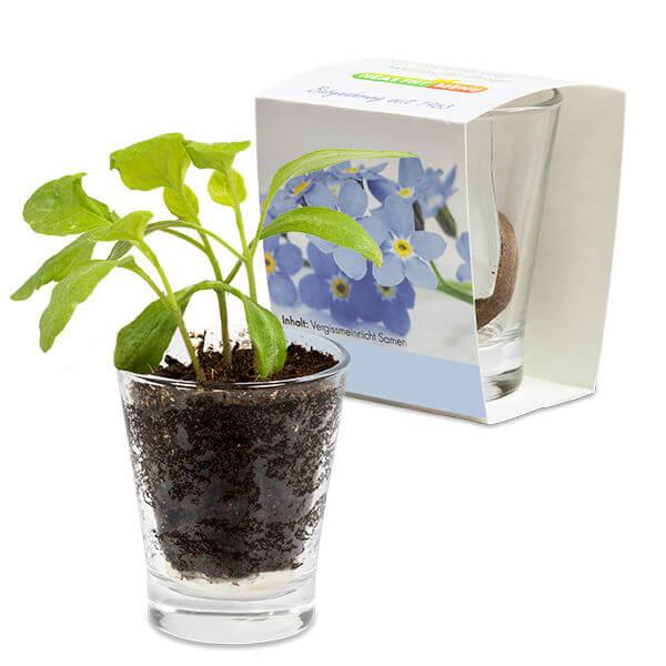 Caffeino Glas für den Frühling